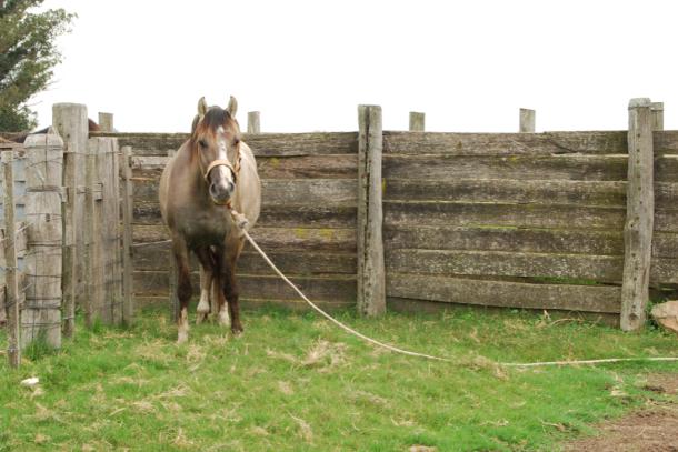 Agarrar a un caballo
