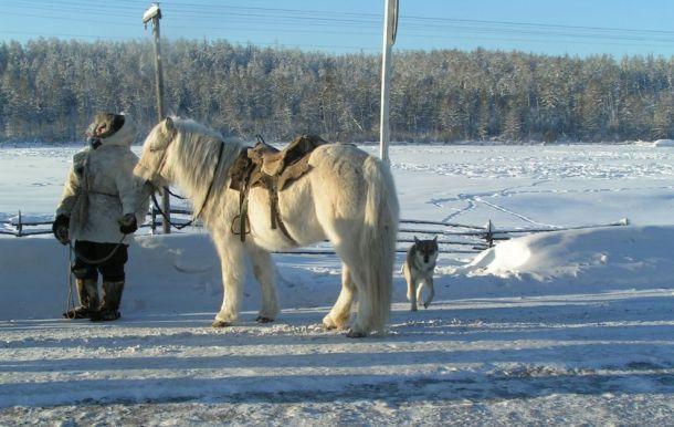 caballoFrio