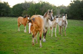 El caballo eninvierno