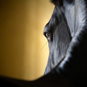 Hermosas fotografías por RaphaelMacek