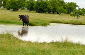 El caballo y elcalor