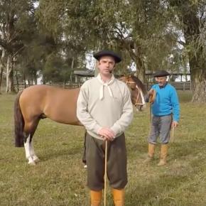 CURSOS // Curso online morfología caballocriollo